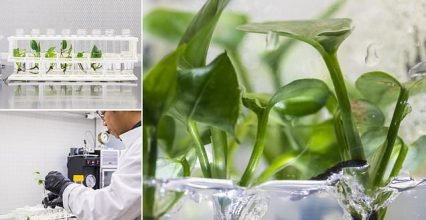 Researchers modify common houseplant to remove toxins from your house