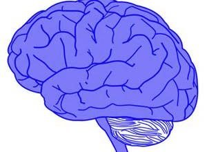 Unexpected link found between feeding and memory brain areas
