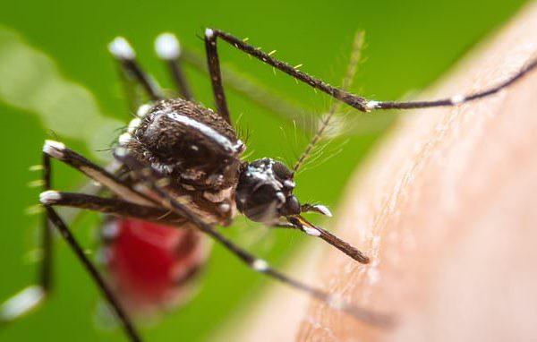 One-dose experimental drug cured 7 volunteers of malaria parasite