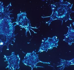 Scientists home in on microRNA processing for novel cancer therapies