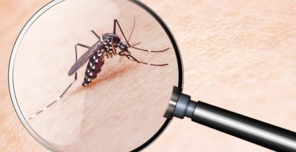 Upcoming mosquitoes-Pests – mosquitoes bring us new diseases