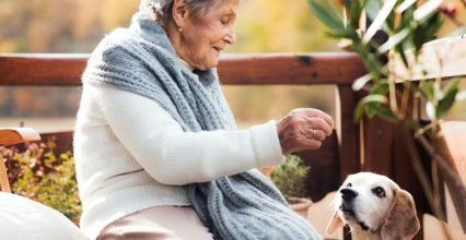 Why Pets the elderly good for
