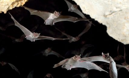 Rabies in humans comes from bats most of the time, not dogs