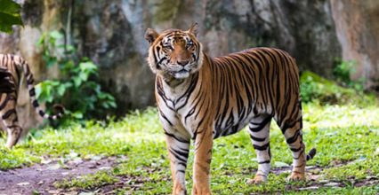 International Tiger Day 2019: 5 informative shows to watch with kids