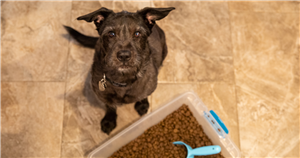 Pet Food Recalls: What You Need to Know