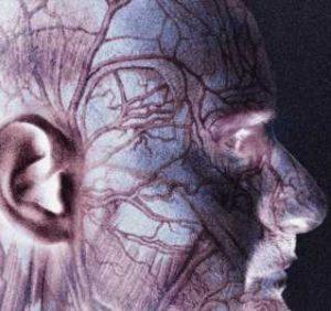 Giant cell arteritis occurs at similar rate in blacks, whites