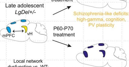 Preventing the onset of schizophrenia in a mouse model