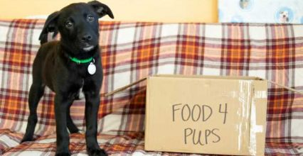 Host a Facebook® Fundraiser to Help Animals