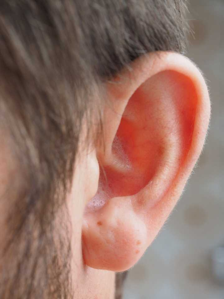 Reprogramming inner ear to regrow hair cells promising target for hearing loss treatments