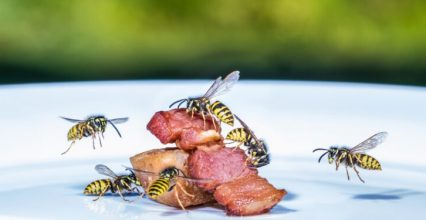 Wasps to fend off: tips and prevention techniques, Naturopathy, naturopathic specialist portal