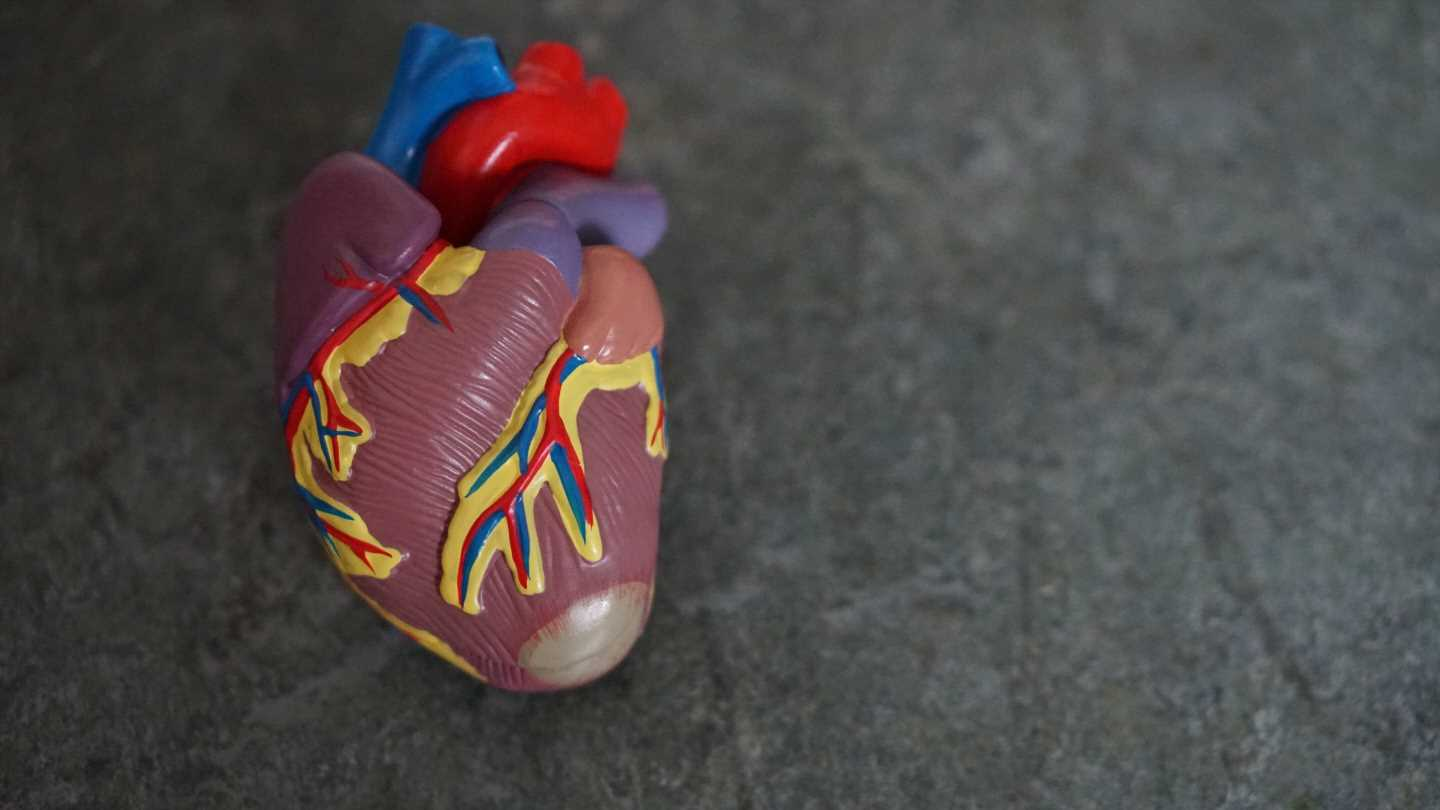 Discovery of cells that heal cardiac damage after infarction
