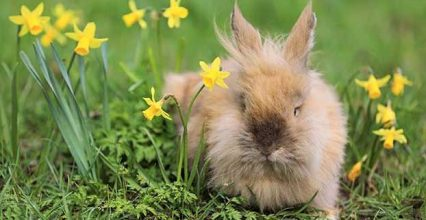 Animal Cosmetics Testing at Issue Again in the EU