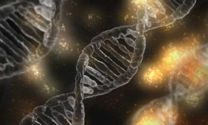 Researchers simplify the study of gene-environment interactions