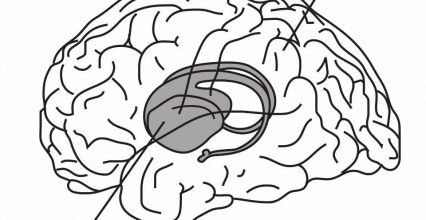 Memory helps us evaluate situations on the fly, not just recall the past
